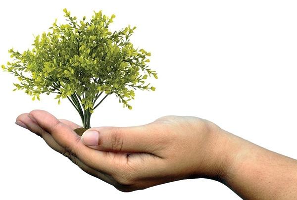 Le service environnement a pour objectif de mettre en place des mesures en respect de l'environnement. Il s'agit d'une photo dans laquelle un arbre est posé dans une main ouverte et tendue
